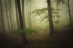Enchanted ethereal forest with green fog Royalty Free Stock Image