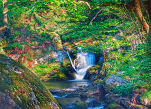 Enchanted fairytale forest. Enchanted secret magical fairytale forest stock image