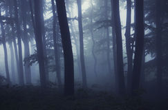 Enchanted fantasy forest with fog at evening Royalty Free Stock Photo