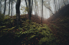 Enchanted fantasy forest with fog and vegetation Royalty Free Stock Image