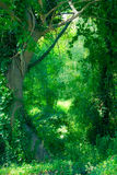 Enchanted Forest Royalty Free Stock Image