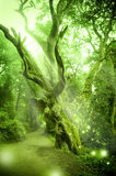 Enchanted Forest. With ancient tree royalty free stock photography