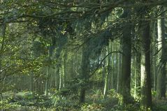 Enchanted forest. Enchanted emerald green forest scenic stock image