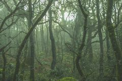 The Enchanted Forest in Algeciras. A famous forest in Algeciras very beautifull that looks enchanted because the fog. A great place to discover stock photo