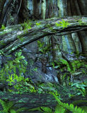 Enchanted forest background with ferns. Stock Photos