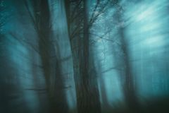 Enchanted forest with blur effect. Lost concept stock image