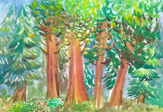 The enchanted forest. Forest colored with watercolors full of trees and leaves Stock Image