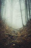 Enchanted forest with fog in autumn Royalty Free Stock Photography