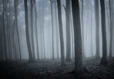 Enchanted forest with fog Stock Photo
