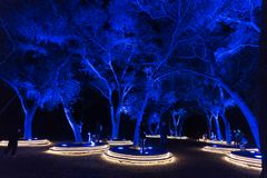 Enchanted: Forest of Light - beautifully illuminated trees in the dark stock image