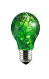 Enchanted Forest Lightbulb Royalty Free Stock Image