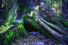 Enchanted forest with magic fireflies Royalty Free Stock Image