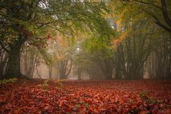 Enchanted Forest Of Canfaito With Fog In Autumn Season Stock Photos