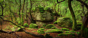 Enchanted forest. Panorama of forest with rock formations Stock Photos