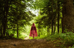 Enchanted forest and path stock images