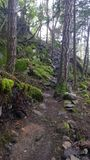 Enchanted Forest on Pender Island Stock Photography