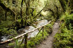 Enchanted Forest - Queulat National Park - Chile royalty free stock photos