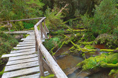 Enchanted Forest, Queulat National Park , Patagonia, Chile. Bridge in the enchanted forest, located in the Portezuelo Sector, Queulat National Park, Patagonia stock photo