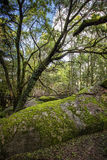 Enchanted Forest. Sintra Mountain Sierra, Portugal Stock Photography
