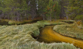 Enchanted Forest Stream. Enchanted Forest Golden Stream with tall grass royalty free stock photos