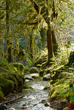 Enchanted Forest Stream. A lush green Oregon forest stream with mossy trees and enchanting light stock photography