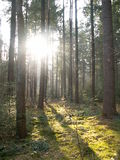 Enchanted forest Stock Image