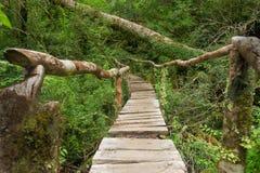 Queulat National Park, Chile. Enchanted forest trail in Queulat National Park, Chile Royalty Free Stock Photo