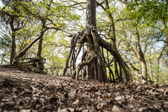 Enchanted forest Royalty Free Stock Photos
