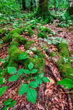 Enchanted forest vertical Royalty Free Stock Photography