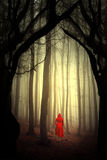 Enchanted forest. Woman in red dress in enchanted forest