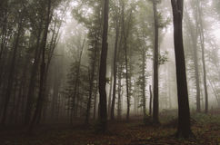 Enchanted magical fairy tale fantasy forest with fog Stock Photos