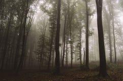 Enchanted magical fairy tale fantasy forest with fog Stock Photos