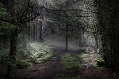 Enchanted magical forest. royalty free stock images