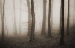 Enchanted mysterious forest with fog in winter Royalty Free Stock Image
