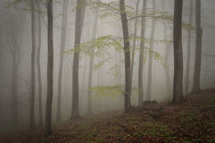 Enchanted mystical forest with fog in autumn Stock Image