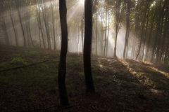 Enchanted mystical forest with sun rays shining trough fog Stock Photography