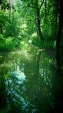 Enchanted river among trees Royalty Free Stock Photo