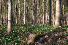 Enchanted spring forest stock image