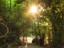Enchanted Summer Morning Forrest Stock Images