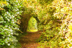 Enchanted Tunnel. A summer stroll with eyes open can reveal true beauty Royalty Free Stock Image