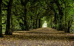 Enchanted tunnel of trees with leaves on ground stock image