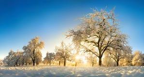 Enchanted winter landscape after sunrise stock image