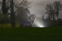 Enchanted Woodland in Syon Park. Silhouette of a Lion in the Enchanted Woodland in Syon Park, London royalty free stock photo
