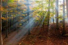 Enchanted woods Royalty Free Stock Photos