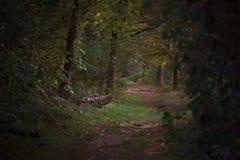 Enchanted woods stock photo