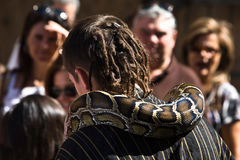 Enchanter змейки стоковые фотографии rf