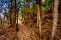 Enchantered forest Royalty Free Stock Images