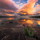 Enchanting зрелище Стоковая Фотография RF