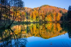 Enchanting autumn colors on the hills in the arboretum along the reservoir in the Aubonne, Switzerland reflect in the water and. Silhouettes of trees with their royalty free stock photos