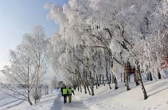 An enchanting beautiful walk in Luleå Royalty Free Stock Photography
